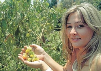 Süper Meyve Karadeniz'e Geliyor