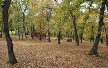 Hasköy Meşe Ormanı Gündemden Düşmüyor
