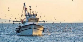 Karadeniz Cimri Davranıyor